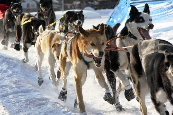 Dog Sledding and Northern Lights