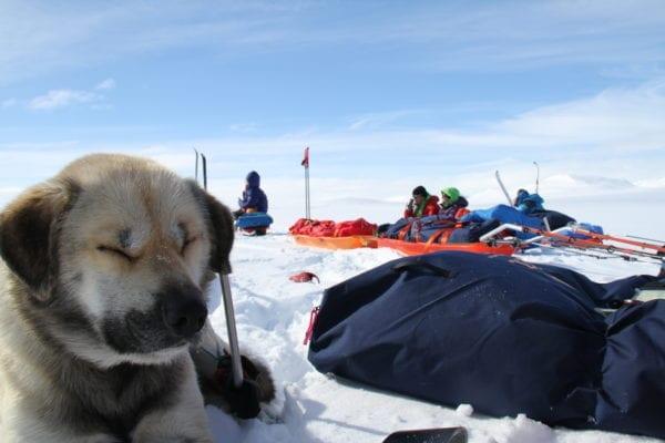 Pasvikdalen – vinterdrømmen